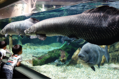 世界最大級の淡水魚水族館「アクア・トト ぎふ」を見学